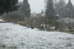 vu etang neige